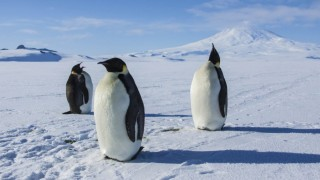 Antarctica A Year on Ice (2013) Full Movie - HD 1080p BluRay